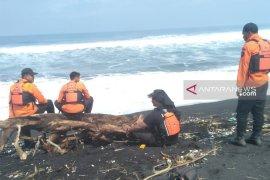 SAR belum temukan nelayan Jember tenggelam di perairan Lumajang