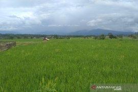 Dinas Pangan Gorontalo dorong penggunaan e-monev ketahanan pangan