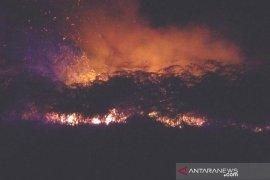 Empat hektare lahan di Penajam hangus terbakar