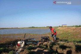 Lahan tanaman padi 3.000 ha di Indramayu terancam gagal panen