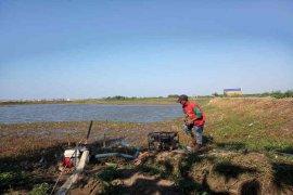 Banyak petani Indramayu tak ikut asuransi