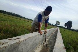 Kemarau sebabkan ribuan hektare sawah di Aceh Barat gagal  tanam