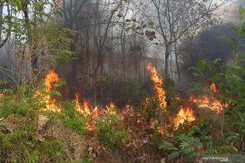 Gawat, kebakaran lahan di Aceh Barat terus meluas capai 50 hektare