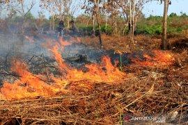 Sejumlah 112 Ha hutan dan lahan gambut kering hangus terbakar di  Aceh