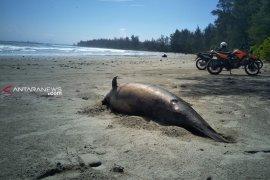 Seekor lumba-lumba mati dekat proyek PLTU Teluk Sepang