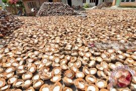KPPU lakukan penelitian inisiatif perdagangan kelapa dan tepung kelapa