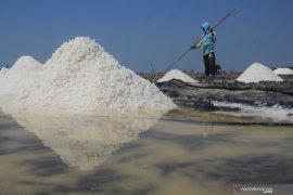 Kemenko Maritim usul garam dikategorikan kebutuhan pokok