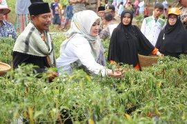 Ponpes Al-Kirom kembangkan aneka jenis sayuran