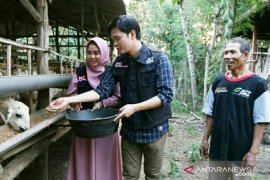 Cerita Anisa dan Dito ikut mengurus kambing Global Qurban