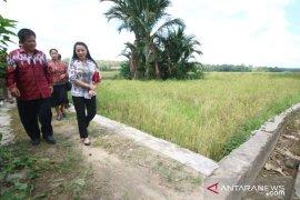 Kalbar dorong pemda maksimalkan potensi pertanian desa