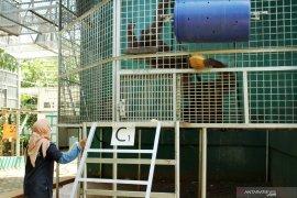 Pusat Rehabilitasi dan Konservasi IAR Indonesia di Ketapang
