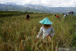 Pengamat ekonomi ingatkan transparansi terkait rencana impor beras ketan