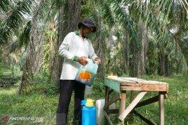 Petani Hutaraja Lamo apresiasi program TMMD