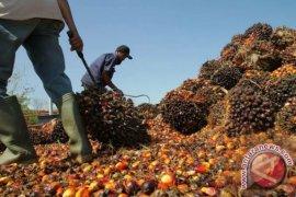 GAPKI : Ekspor CPO meningkat 18 persen