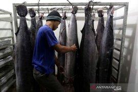 Produksi ikan nasional