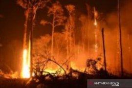 12,55 hektare hutan di Bangka Belitung terbakar