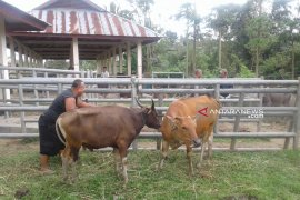 Pedagang daging di Rejang Lebong diminta manfaatkan RPH