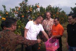 "Teknologi ""Bujangseta"" dongkrak produksi jeruk Indonesia"