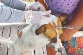 Ribuan hewan peliharaan di Kapuas divaksin rabies