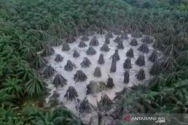 Semburan lumpur pengeboran ilegal Muba berhasil ditutup