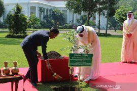 Presiden Jokowi dan Sheikh Mohamed tanam pohon damar di Istana Bogor