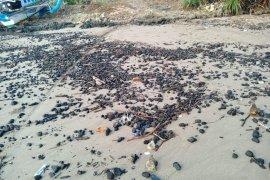 HMB Jakarta kecam pencemaran laut Pandeglang akibat 7 ribu ton batubara tumpah
