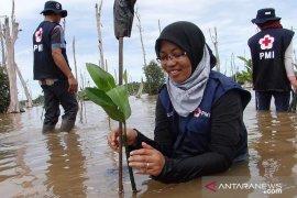 PMI komitmen jaga kelestarian hutan mangrove di Indonesia