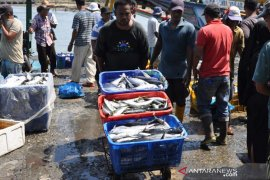 Cuaca membaik, tangkapan ikan capai 250 ton per hari