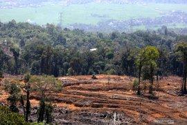 Direktur Madani:  Perluas hutan untuk capai target penurunan GRK