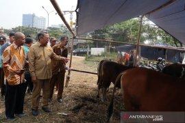 Wakil Wali Kota Tangsel sidak tempat pemotongan hewan qurban