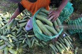 Musim kemarau, harga sayuran di Ngawi naik