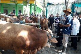 Populasi ternak sapi di Kota Kediri masih kurang