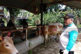 Jelang Idul Adha, petugas di Medan temukan hewan kurban cacat