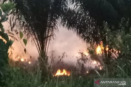 Kebakaran hutan di Register 45 Mesuji Page 1 Small