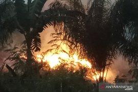 Kebakaran hutan di Register 45 Mesuji  Page 2 Small