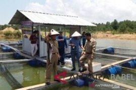 PT Timah bantu Pemdes Bukit Kijang budidayakan ikan