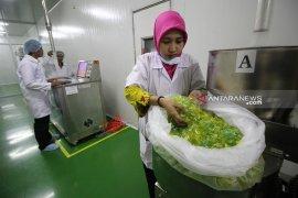 Kemenperin: Peluang industri cangkang kapsul rumput laut sangat potensial