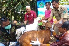 Dinas Peternakan Kaltim lakukan pemeriksaan sapi kurban