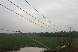 Tiang listrik roboh di Lampung Timur Page 1 Small