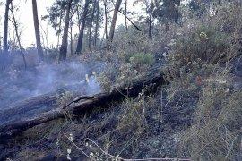 BMKG Juanda pantau titik api di Jawa Timur