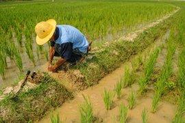 Kurang minat jadi petani kalangan generasi milenial di Lebak