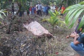 Warga Abdya temukan mayat di kebun kakao