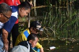 Bupati Bangka tebar 500 ekor benih ikan nila di kolong apat