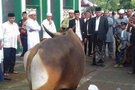 Pemprov sediakan 31 sapi kurban untuk Idul Adha