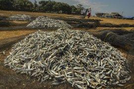 Angka Konsumsi Ikan Nasional
