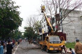 Pemkot Tanjungbalai pangkas pohon tua rawan tumbang