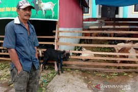 Harga hewan kurban di Ambon bervariasi