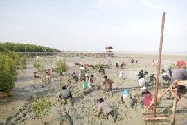 Dua ribu bibit baru mangrove ditanam di areal Mempawah Mangrove Park