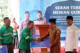 PT Mifa Bersaudara sumbang belasan sapi kurban untuk warga Aceh Barat