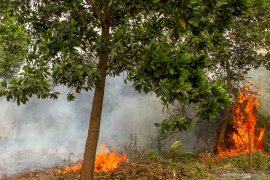Riau deploys four helicopters to extinguish forest fires